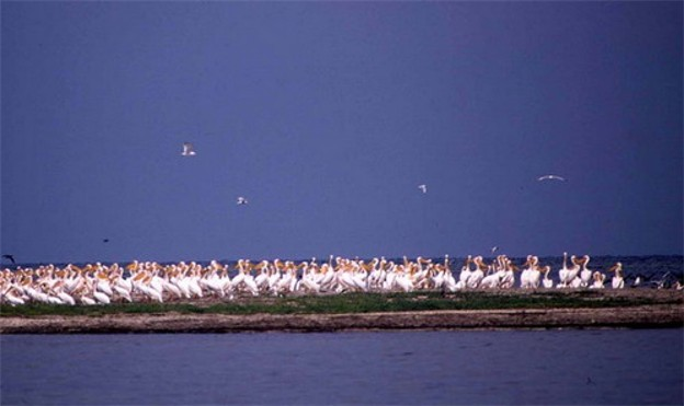 Image - Pink pelicans in the Black Sea Biosphere Reserve.