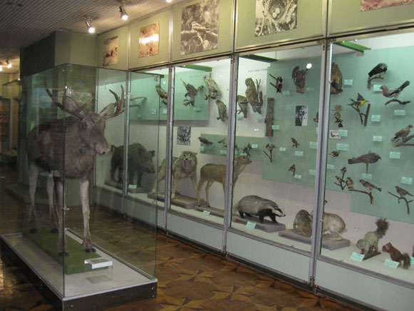Image - Cherkasy Oblast Regional Studies Museum: the zoological collection.