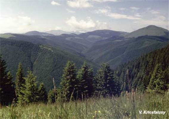 Image - Chyvchyn Mountains: the upper reaches of the Chornyi Cheremosh River.
