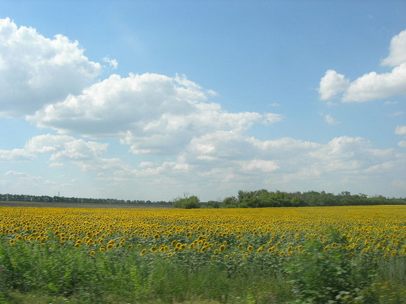 Image - Dnipro Lowland (steppe in Poltava oblast)