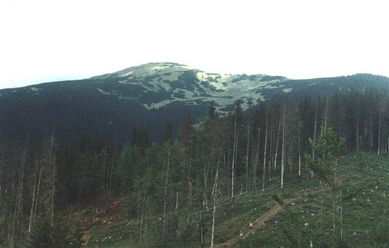 Image -- Gorgany Mountains: logged forest and view of Mount Popadia.