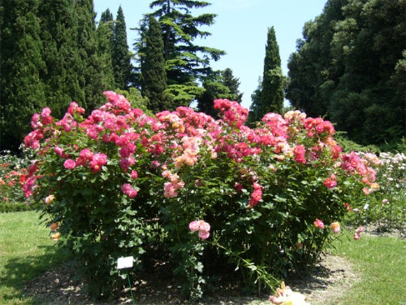 Image - The Nikita Botanical Garden near Yalta in the Crimea.