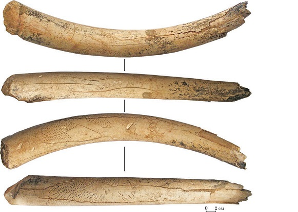 Image - Obolonnia archeological site: ornamented mammoth tusk (ca 20,000 years old).