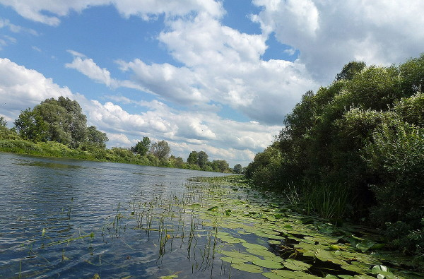 Image - The Seim River near Ihorivka.