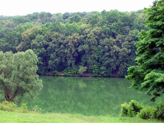 Image - A pond in the Sokyryntsi park.