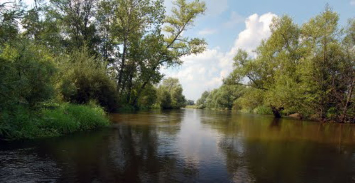 Image - The Vepr (Wieprz) River near Lubartow.