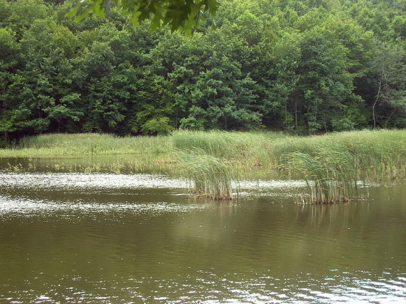 Image - A lake in the Zacharovanyi Krai National Nature Park.
